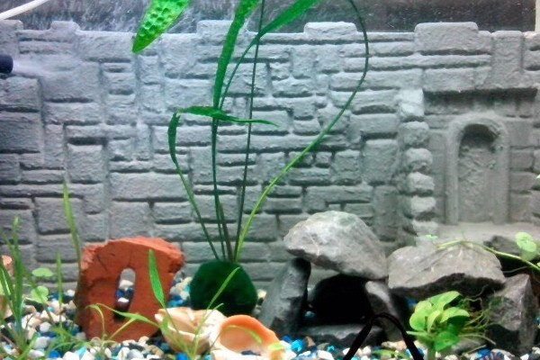 Как сделать фон для аквариума своими руками 60