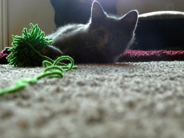 Игрушки для котят своим руками фото 598