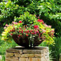 К чему снится-поливать цветы