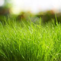 К чему снится зеленая трава