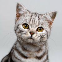 К Чему Снятся Нападающая Кошка