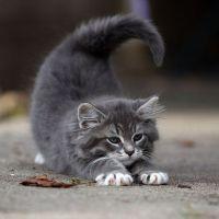 Снится серый котенок на руках фото