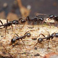снится кусают муравьи