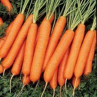 Когда худеешь можно есть морковь