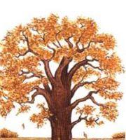 Картинки про осень для детского сада нарисовать