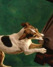 прививка после укуса собаки