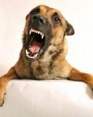 укус собаки что делать