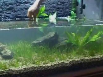 Дизайн аквариума своими руками14