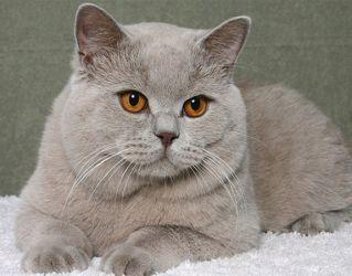 Кастраты коты сколько живут