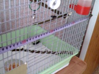 Жердочки для попугаев своими руками 3
