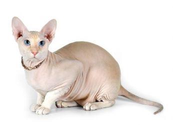 картинки какие кошки бывают