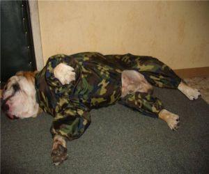 Одежда для собак своими руками 43