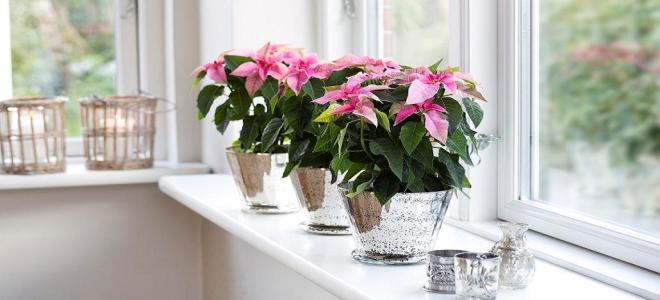 Искусственные цветы фэн-шуй