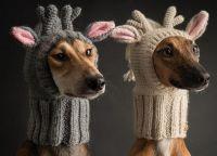 Шапки для собак2
