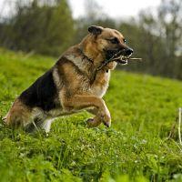 Страйд плюс для собак инструкция