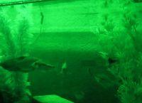 Светодиодная подсветка для аквариума своими руками36