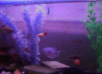 Светодиодная подсветка для аквариума своими руками39