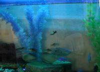 Светодиодная подсветка для аквариума своими руками34