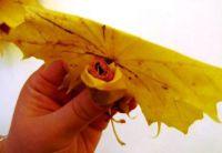 Осенний букет своими руками для детского сада 16