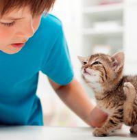 Средство от блох для котов
