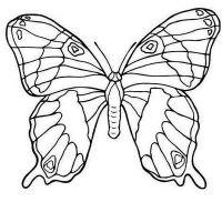 бабочки из пластиковых бутылок 28