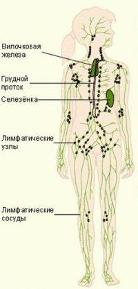 схема лечения от паразитов в организме