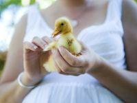 Фотосессия беременных на природе летом 12