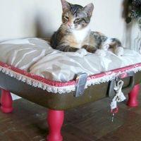 Вязаная одежда для кошек своими руками фото 103