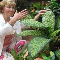 Дейсвительно ли комнатный цветок диффебахия вредна для здоровья