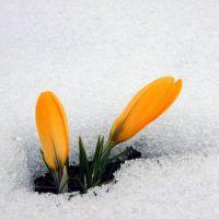 Заклички весны для детей