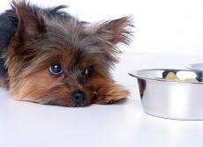 Собака ничего не ест, только пьет воду
