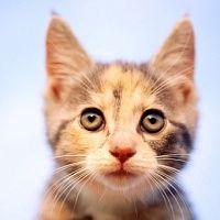 почему у кошки сухой нос