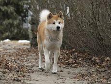 Сколько лет живут собаки Продолжительность жизни дворовых и породистых собак
