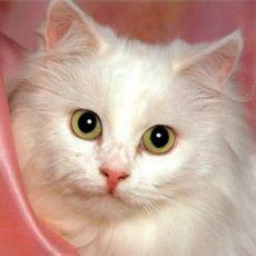 Сколько давать вазелинового масла котам