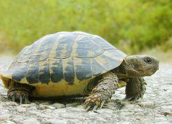 Как назвать черепаху мальчика1