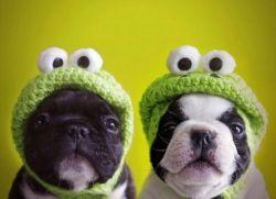 Шапки для собак
