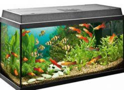 Что нужно для аквариума начинающему