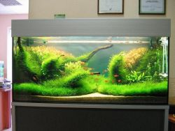 Вода для аквариума в домашних условиях