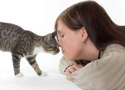 Средства от аллергии на кошек