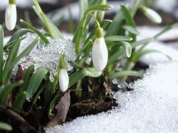 Загадки про весну с ответами для детей