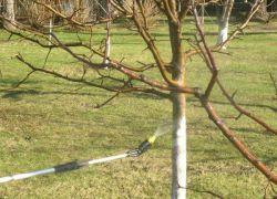 Осеннее опрыскивание сада