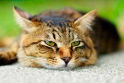 Сколько живут коты почечной недостаточности