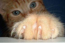 как коту стричь когти