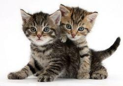 Имена для породистых котов мальчиков