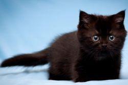 Милое имя для кота мальчика