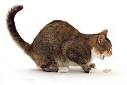 Кота рвёт слюной