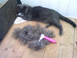 Клочками лезет шерсть у кота