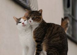 Вместо кастрации кота