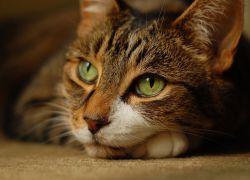 Ангина лакунарная лечение в домашних условиях