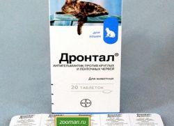 Как правильно дать кошке таблетку от глистов? хелп! | форум Woman ru